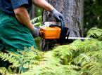 Lasy <strong>Państwowe</strong>: Budżet zarobi na <strong>sprzedaży</strong> <strong>państwowego</strong> drewna