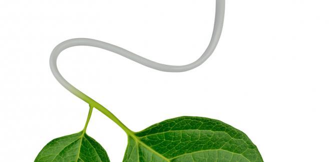 liść-ekologia-prąd