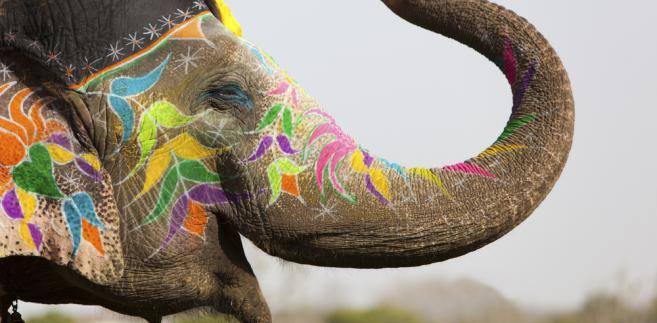 słoń, Indie