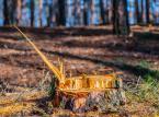 Wycinka drzew: Zaostrzone przepisy już obowiązują. Sprawdź, jak zrobić to legalnie