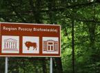 Kolejna prośba o zaprzestanie wycinki w Puszczy Białowieskiej. KE wysłała list do polskiego rządu