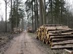 RPO chce odpowiedzialności za przekroczenie obowiązków służbowych przez strażników leśnych