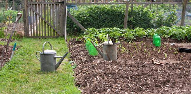 Działkowiec zobowiązany jest do dbania o estetyczny wygląd swojego ogrodu i nie zakłócać spokoju sąsiadom. Za szereg wykroczeń grożą mandaty karne.