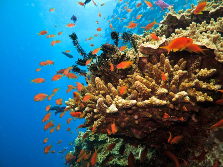 Wielka Rafa Koralowa – największa na świecie rafa koralowa, położona u wybrzeży Australii. Jest to największa na Ziemi pojedyncza struktura wytworzona przez organizmy żywe, widoczna nawet z kosmosu