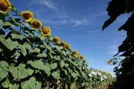 Biopaliwowa poprzeczka podniesiona wysoko