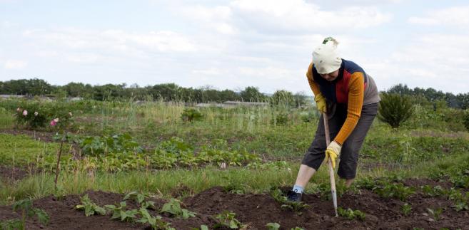 rolnictwo, plantacja