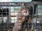 Krzysztof Czabański: Czas ucywilizować prawa zwierząt [WYWIAD]