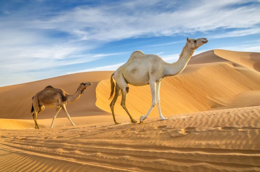 Pustynia w Zjednoczonych Emiratach Arabskich